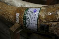 Une défense d'éléfant, avec une étiquette de contrôle du gouvernement, dans une usine d'ivoire à Hong Kong, en Chine. Le gouvernement chinois annoncé vendredi que le commerce de l'ivoire sera totalement interdit dans le pays à la fin 2017. /Photo d'archives/REUTERS/Bobby Yip