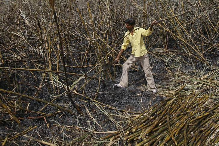 A farmers uses a machete to cut sugarcane as he harvests a field outside Gove village in Satara district, about 260km (161 miles) south of Mumbai May 10, 2011. REUTERS/Vivek Prakash/Files