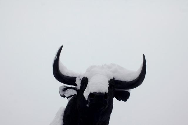 Snow covers a statue of a bull during a snowfall outside a bullring in Ronda, near Malaga, Spain January 19, 2017. REUTERS/Jon Nazca