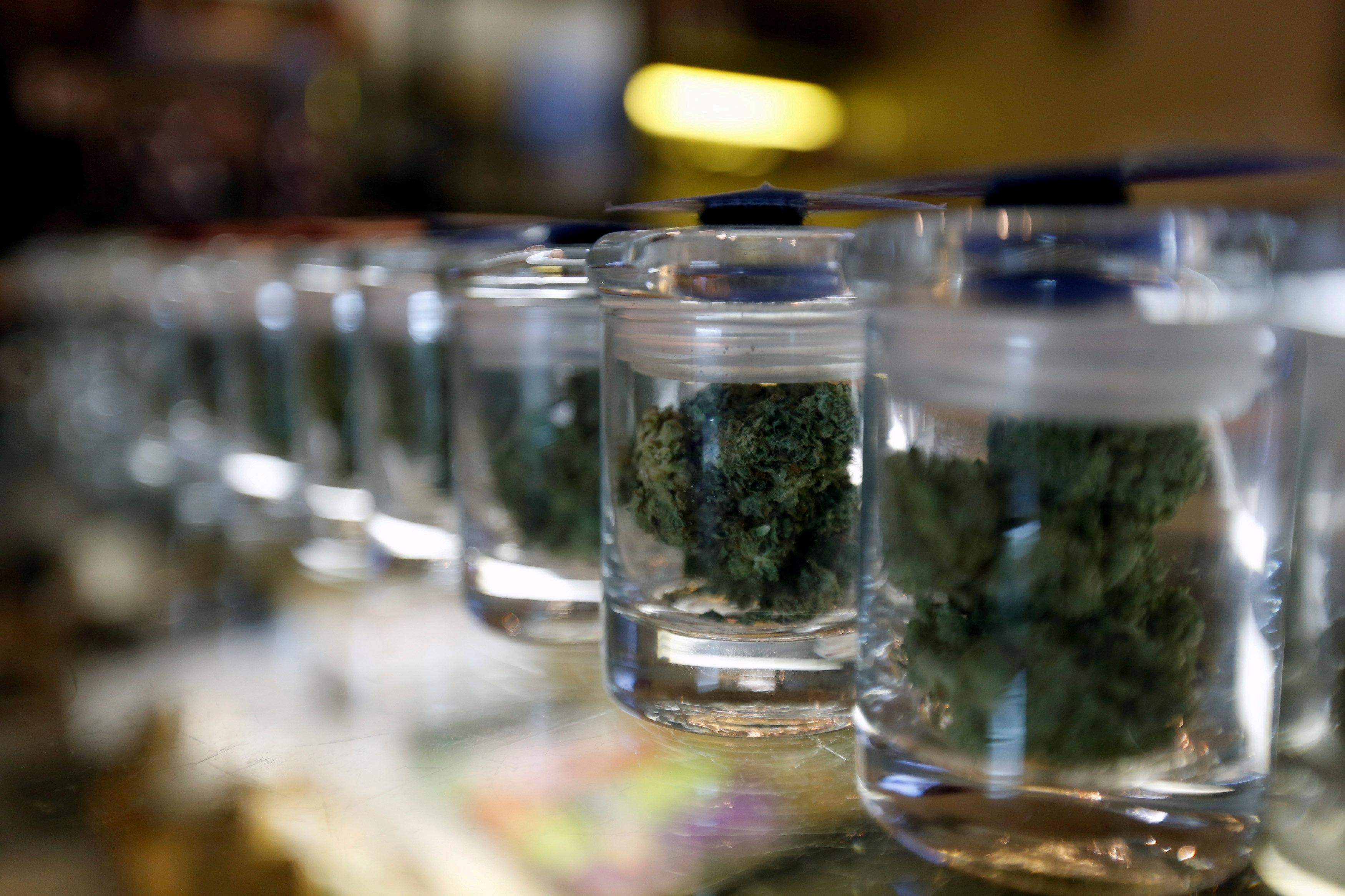 Sessions' role as U.S. attorney general unsettles legalized pot industry