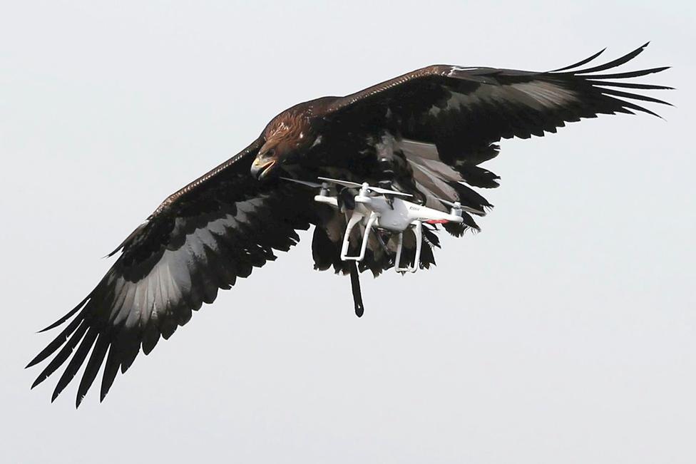 Águila versus Dron ?m=02&d=20170210&t=2&i=1172198551&w=976&fh=&fw=&ll=&pl=&sq=&r=2017-02-10T173534Z_25791_RC1EDD374E10_RTRMADP_0_FRANCE-AIRFORCE-CONTROL
