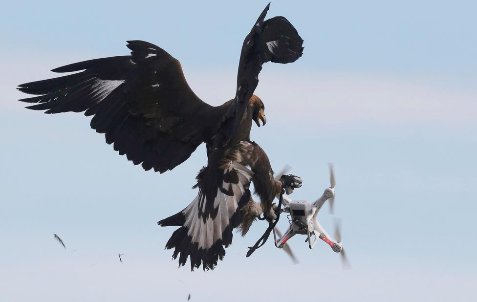 Águila versus Dron ?m=02&d=20170210&t=2&i=1172198553&w=976&fh=&fw=&ll=&pl=&sq=&r=2017-02-10T173534Z_25791_RC1D6E43E220_RTRMADP_0_FRANCE-AIRFORCE-CONTROL