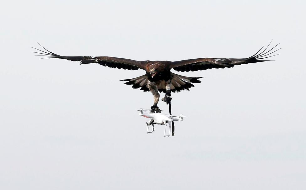 Águila versus Dron ?m=02&d=20170210&t=2&i=1172198557&w=976&fh=&fw=&ll=&pl=&sq=&r=2017-02-10T173534Z_25791_RC1B1096E190_RTRMADP_0_FRANCE-AIRFORCE-CONTROL