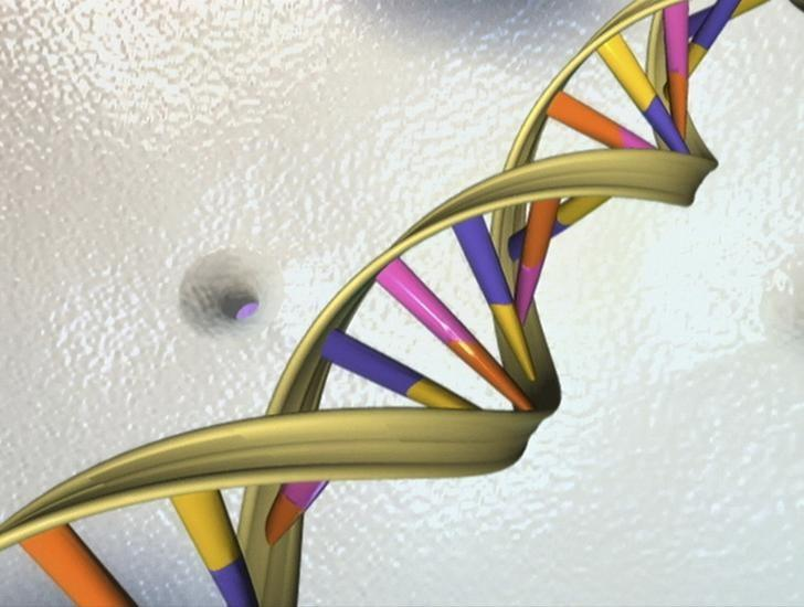A DNA double helix is seen in an undated artist's illustration released by the National Human Genome Research Institute to Reuters on May 15, 2012.   REUTERS/National Human Genome Research Institute/Handout/Files
