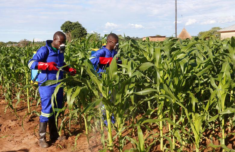 Officials spray maize plants affected by Armyworms in Keembe district, Zambia, January 6, 2017. Picture taken January 6, 2017. REUTERS/Jean Mandela