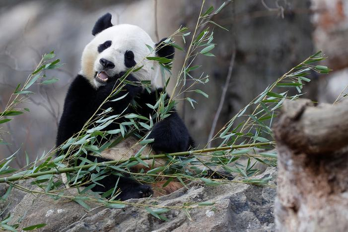 Just once, can't we meet a panda named