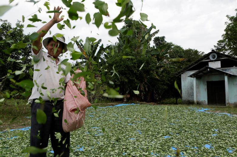 A man spreads coca leaves on the ground to be sun dried outside a church in President Evo Morales' hometown of Villa 14 de Septiembre in the Chapare region in Cochabamba October 11, 2014. REUTERS/David Mercado/File Photo