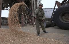 Рабочий агрокооператива Юбилейный сбрасывает в кучу пшеничное зерно в Красноярском крае. 24 сентября 2013 года. Россия, один из крупнейших в мире поставщиков пшеницы, рассматривает возможность экспорта части своих государственных запасов зерна общим объемом 4 миллиона тонн, чтобы освободить хранилища перед новым урожаем, сообщили источники в отрасли. REUTERS/Ilya Naymushin