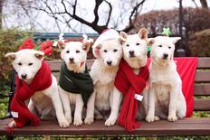 South Korea's former president Park Geun-hye's pet dogs are seen in this handout picture provided by the Presidential Blue House and released by News1 on December 24, 2015. The Presidential Blue House/News1 via REUTERS