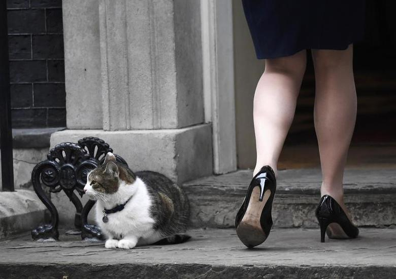 Britain's Secretary of State for Justice Liz Truss walks past Larry the Downing Street cat as she arrives for a cabinet meeting, London, March 14, 2017.  REUTERS/Toby Melville  TPX IMAGES OF THE DAY