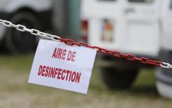 A Montsoué. Le ministre de l'Agriculture, Stéphane Le Foll, a dit lundi espérer la fin prochaine de l'épidémie de grippe aviaire en France, qui a conduit à l'abattage préventif de quelque quatre millions de volailles. /Photo prise le 12 janvier 2017/REUTERS/Régis Duvignau