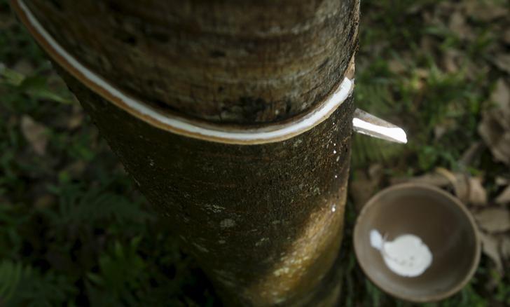资料图片:2015年4月越南河内南部Huong Tra村的橡胶林。REUTERS/Kham