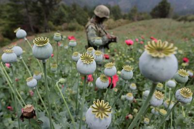 Mexico's poppy war