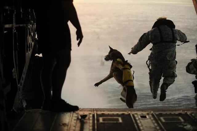 A U.S. Army soldier with the 10th Special Forces Group and his military working dog jump off the ramp of a CH-47 Chinook helicopter from the 160th Special Operations Aviation Regiment during water training over the Gulf of Mexico as part of exercise Emerald Warrior 2011 in this U.S. military handout image from March 1, 2011.  REUTERS/Manuel J. Martinez/U.S. Air Force/Handout
