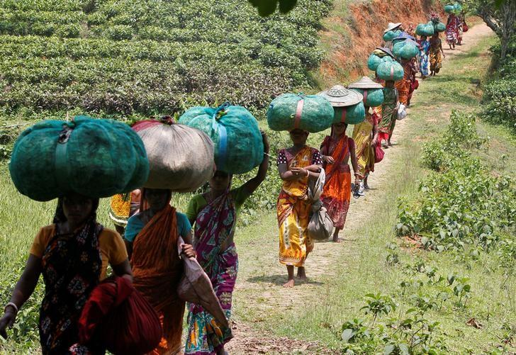 Tea garden workers carry sacks filled with tea leaves at Durgabari Tea Estate on the outskirts of Agartala, May 4, 2017. REUTERS/Jayanta Dey/Files