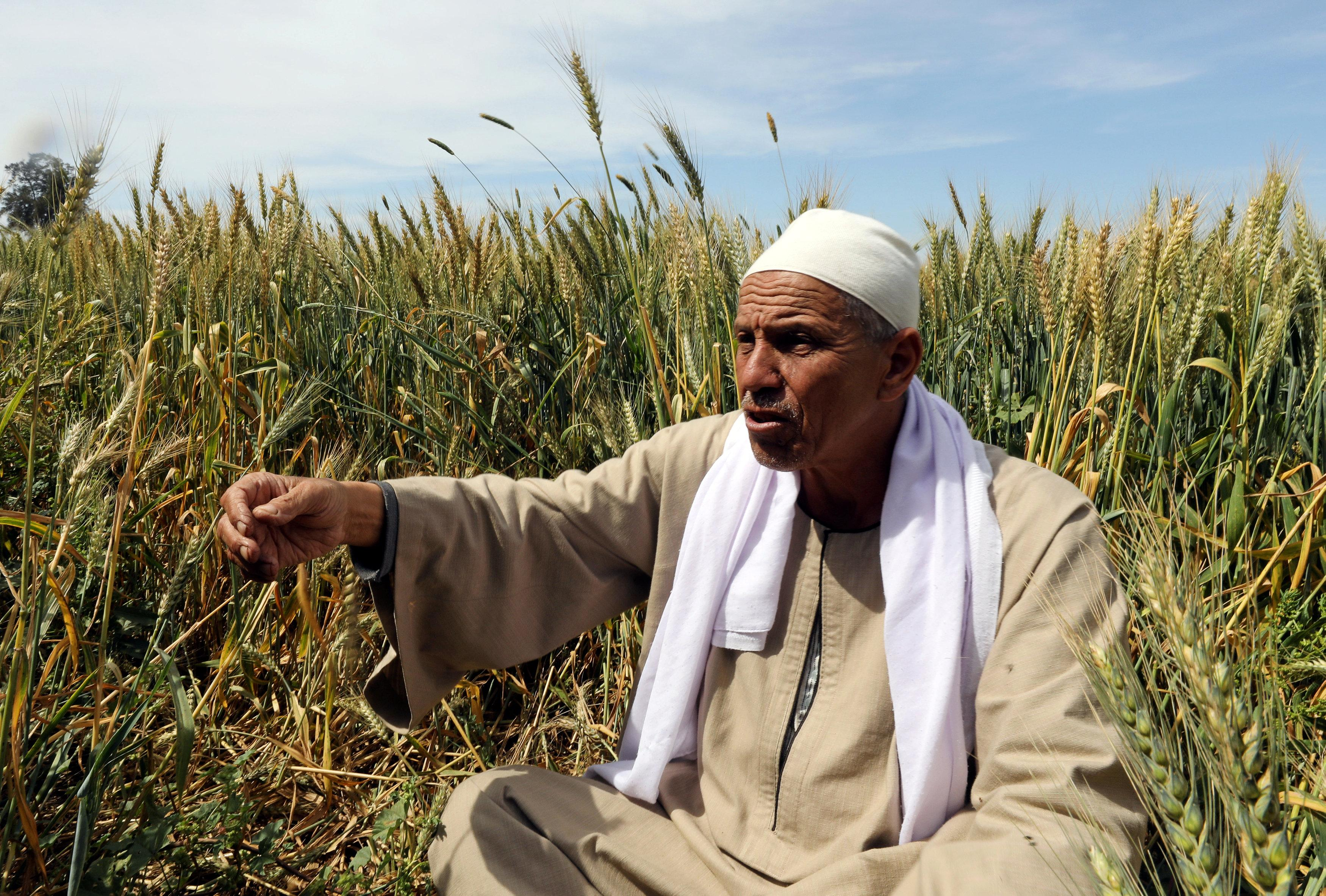 Farmer Mohamed Abdelkhaleq speaks during an interview with Reuters in a field in the Beheira Governorate, north of Cairo, Egypt April 4, 2018. Picture taken April 4, 2018. Mohamed Abd El Ghany