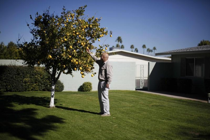 A senior picks some fruit off a tree in Sun City, Arizona, January 5, 2013. Lucy Nicholson