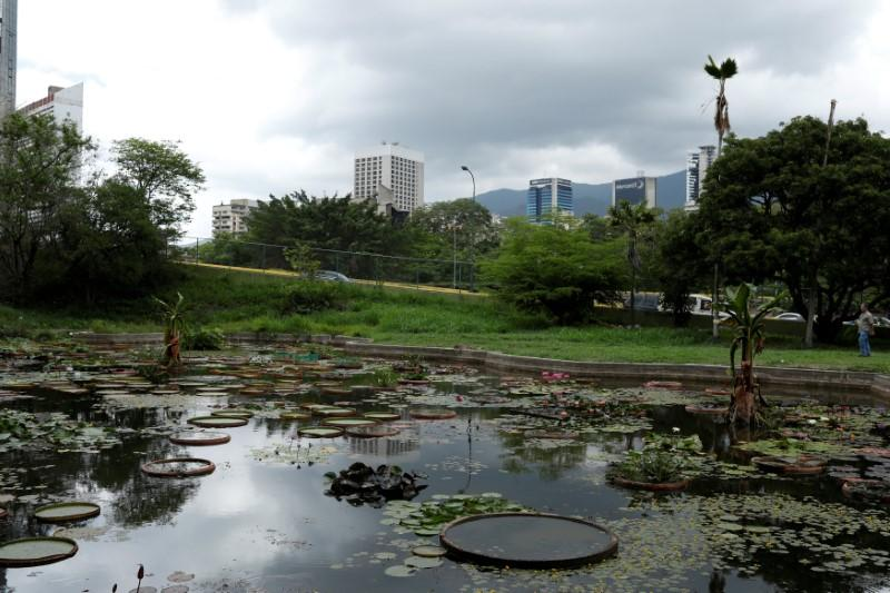 A half-empty lagoon built in the shape of Venezuela is seen at the botanical garden in Caracas, Venezuela July 9, 2018. Picture taken July 9, 2018. Marco Bello