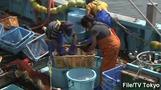South Korea bans Japan fish over fallout fears