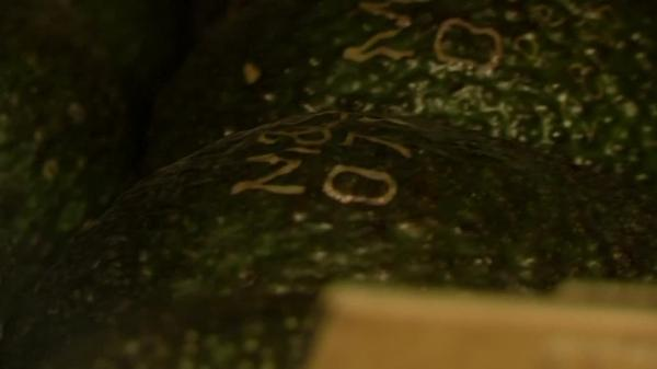 British retailer says laser-etched avocados will cut packaging.
