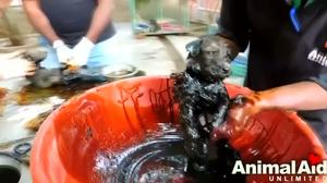Puppies in India survive following incredible rescue
