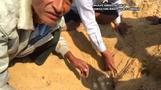 كمبوديا تعثر على جحر به بيض لنوع من السلاحف شبه المنقرضة