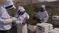 Hybrid bee at the heart of UAE sustainable honey plan