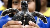 INSIGHT: Thousands of endangered turtles expected to nest at Indian beach