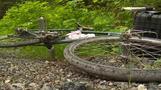 米ワシントン州で野生のクーガーが男性2人を襲撃、1人死亡(字幕・21日)