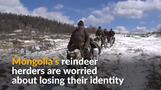 Mongolia's reindeer herders fear identity loss in face of hunting ban
