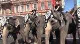Elephant parade paralyses St. Petersburg city centre