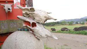 Nuclear tourism seeks to revive Fukushima