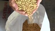 习特会后 中国重又进口美国大豆