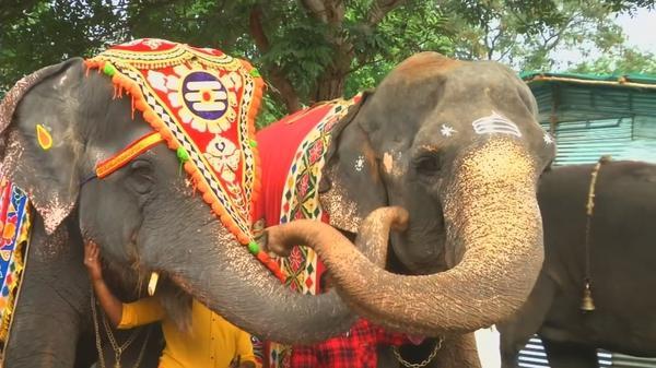 Temple elephants get pampered at rejuvenation camp