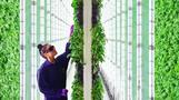 拡大と進化を続けるアメリカの室内農業の今(12日)