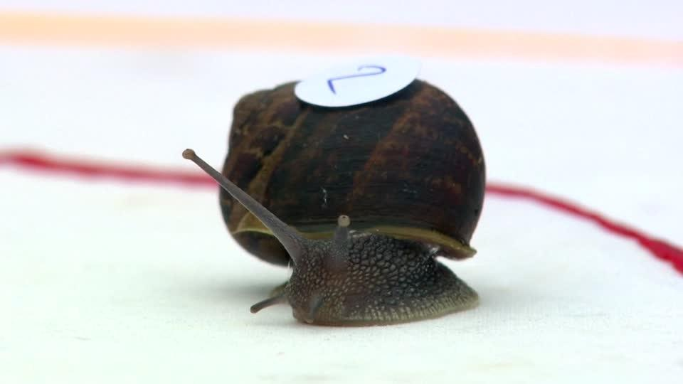 Ready, steady, slow - snails slug it out at racing world champs