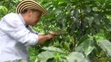 Colombia coffee growers' new nemesis: machines