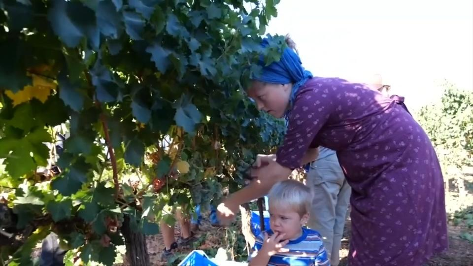Evangelicals harvest land in settlements Israel hopes to annex