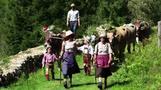 الأبقار الإيطالية تعود إلى مزارعها بعد انتهاء \