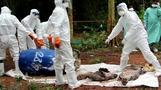 السلطات التايلاندية تعرض جثث نمور نفقت بعد مصادرتها من معبد بوذي