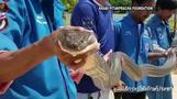 اصطياد ثعبان كوبرا طوله أربعة أمتار في حي بتايلاند