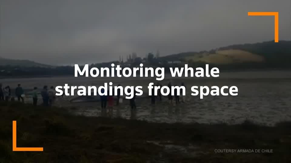 Watching from space to detect whale strandings
