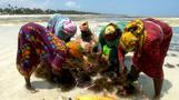 Zanzibar seaweed farmers lament climate change impact on harvest