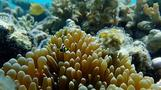 How underwater acoustics could help with coral reef restoration