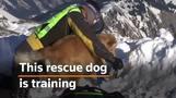 Switzerland's search dogs prepare for deadly avalanche season