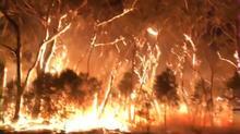豪森林火災、火の海の中で必死に消火活動 気温上昇で拡大懸念(字幕・8日)