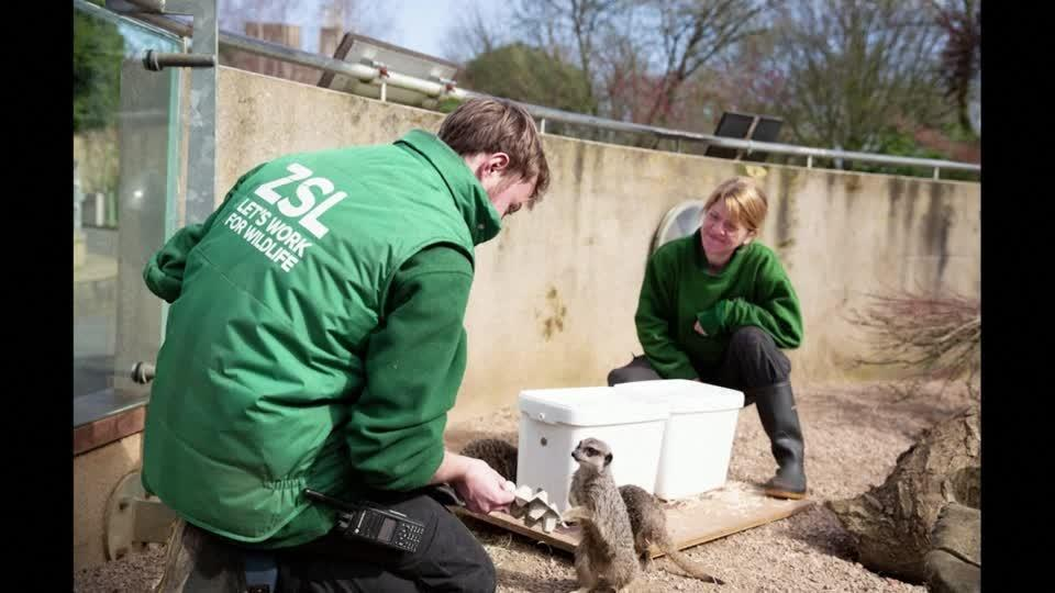 Business as usual at London Zoo, but without the public