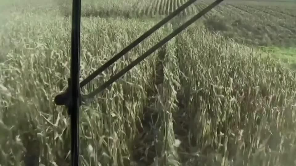 The race to save America's harvest