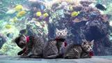 Kittens from animal shelter visit U.S. aquarium
