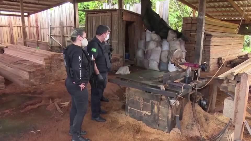 Brazil arrests dozens in Amazon logging ring